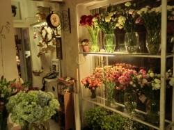 GACHOA花