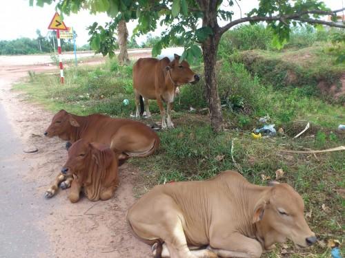道路でくつろぐ動物達