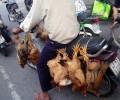 [2013/4/6]バイクで運ばれる鶏達