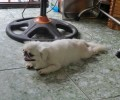 [2013/5/29]犬も暑がるホーチミンの熱気