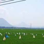 [2013/5/16]片田舎の田園風景