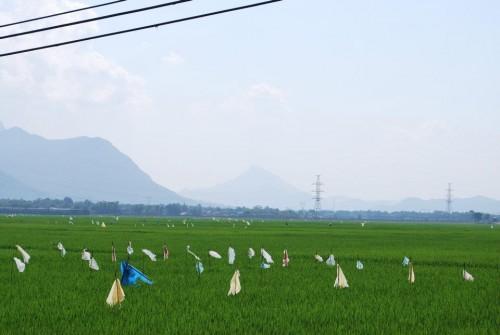 片田舎の田園風景