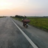 [2013/5/31]ある夕方の出荷風景