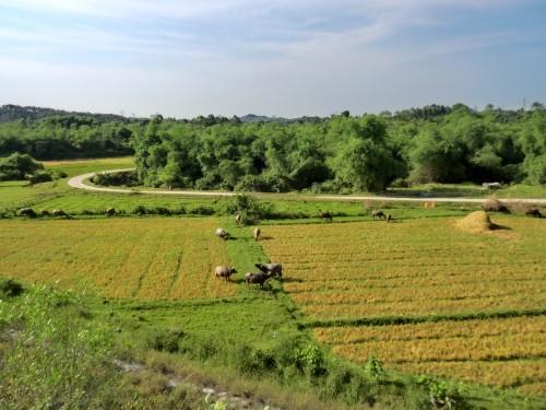 コメ大国ベトナムの風景