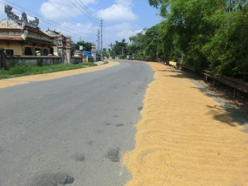道路に米が干してありました。