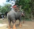ベトナム・ラオスバイクの旅:第3話~象使いの民族とラック湖の大自然~