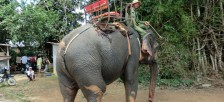 バンメトートとダラットの間にあるラック湖で象に乗ろう