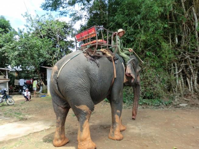 ラック湖で象に乗る