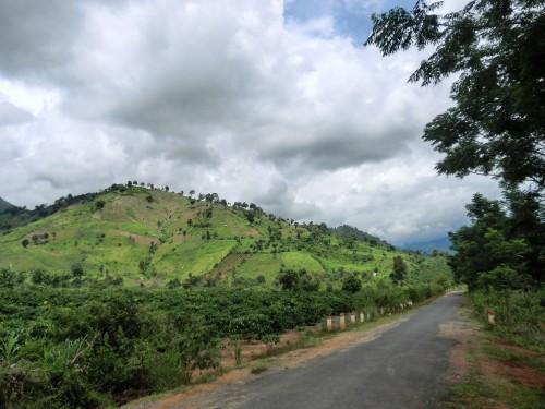 低木が美しい山々
