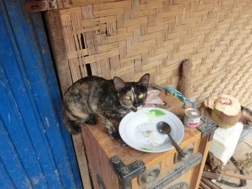 食事中の猫