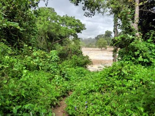 滝に向かう小道