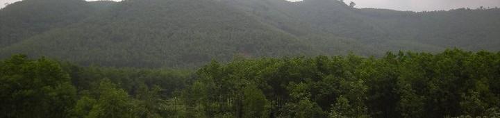 森林の記事一覧