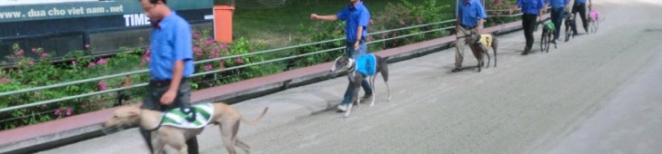 Greyhound Racing (グレイハウンド レース)