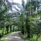 ヴンソアイ公園(Du Lịch Sinh Thái Vườn Xoài)