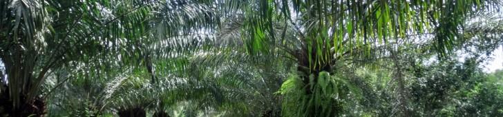 Du Lịch Sinh Thái Vườn Xoài (ヴンソアイ公園)