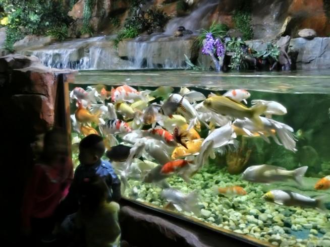 魚がたくさん