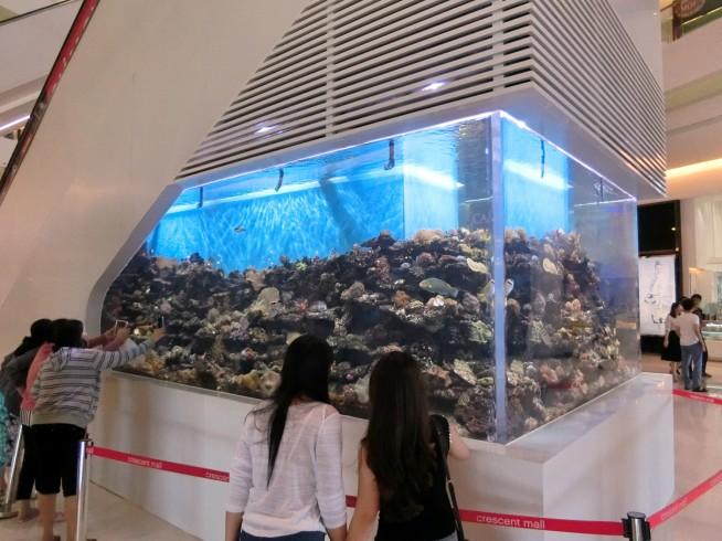 ミニ水族館?