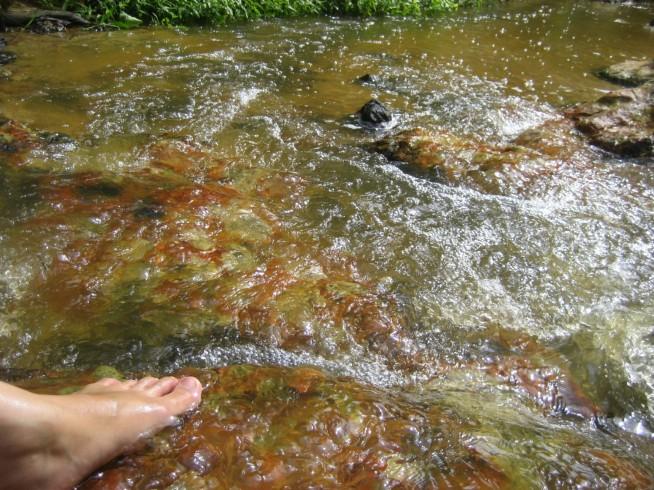 意外ときれいな水
