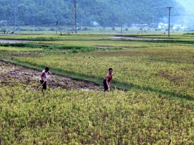 農作業に励む男たち