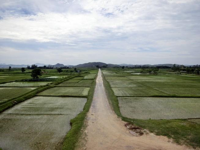 真っ直ぐ続く道と水田