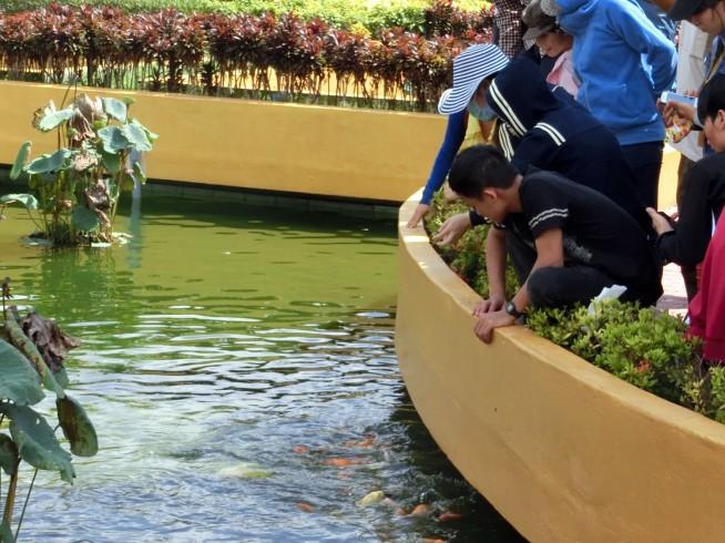 魚に餌をやる人々
