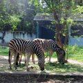 ベトナム最大のテーマパーク「ダイナム公園」~ホワイトタイガーもいる本格的な動物園編~
