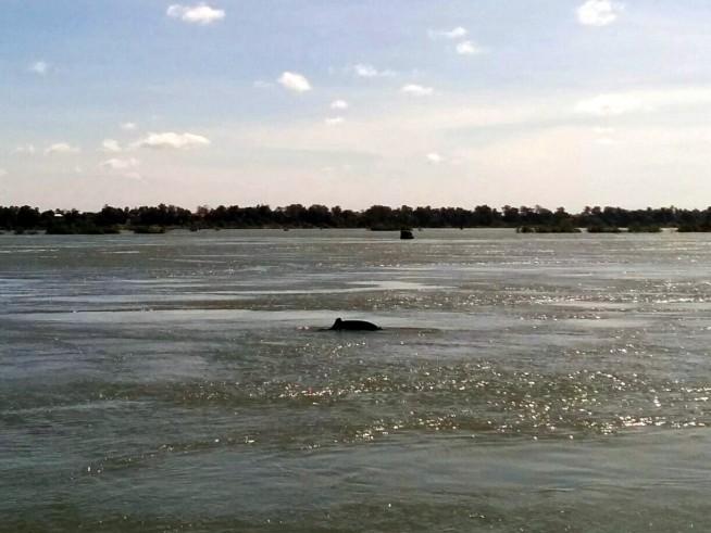川イルカ、発見
