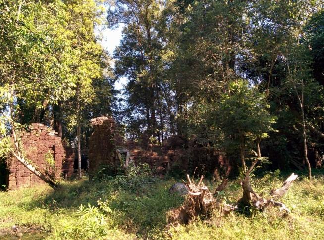 森に埋もれた遺跡