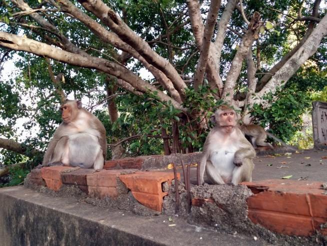 猿がたくさんいます