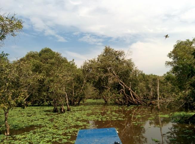 マングローブにはたくさんの鳥が住んでいます