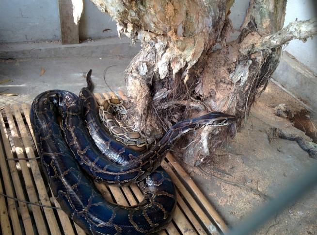 ヘビの展示も