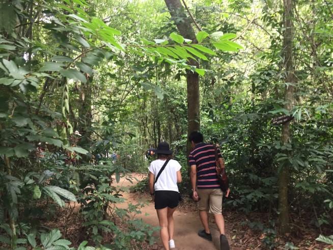 森の中をハイキングする感じです。
