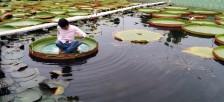 蓮の葉に乗って記念撮影を楽しめるお寺「福景寺(Phước Kiển Tự)」