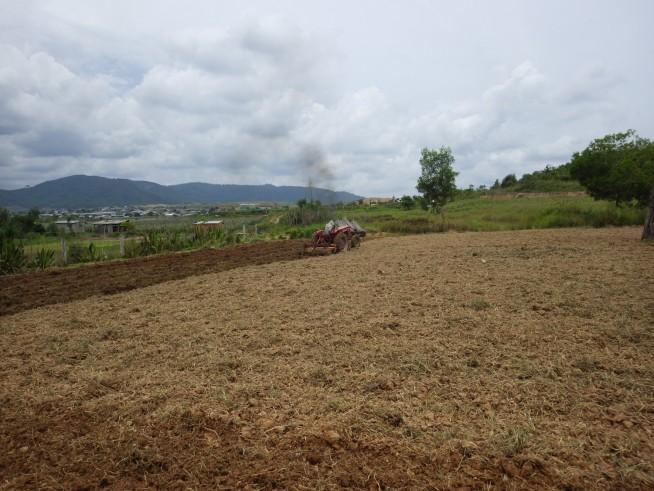 露地栽培の場合、南部では耕運機を使うところが多いです