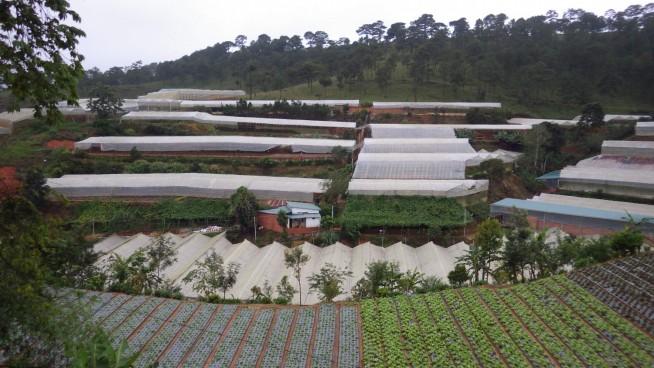 国道から少し離れた農園 かつて谷だったところに農園を開いています