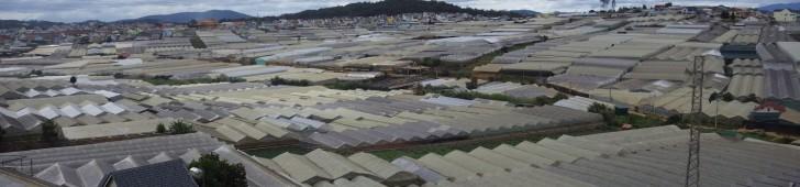 ラムドン省にみるベトナムの農業の問題点