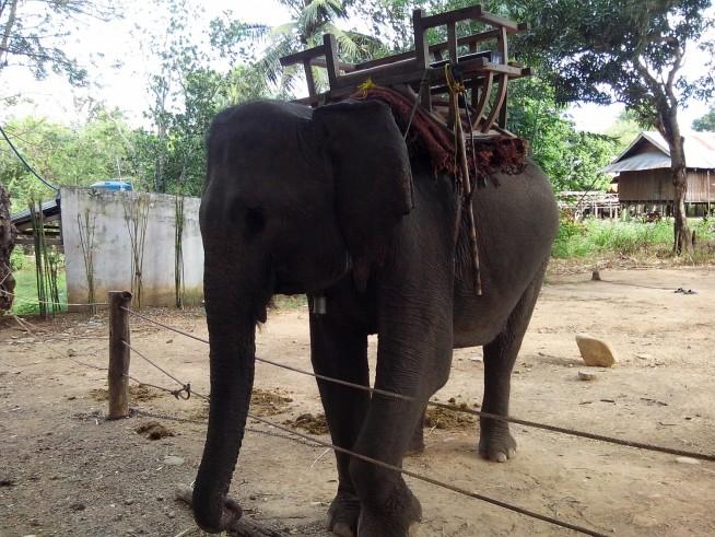 この象に乗ります