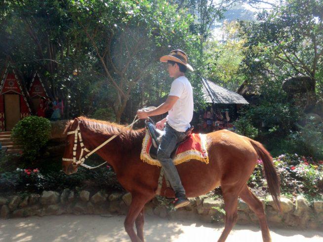 馬にも乗れます
