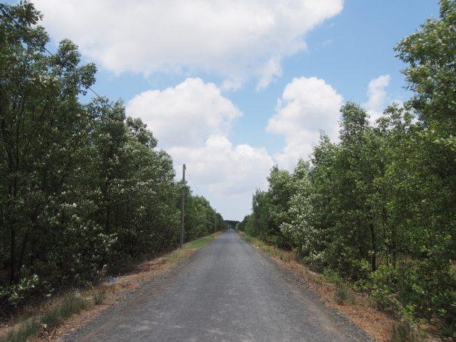 マングローブ林の中を進む