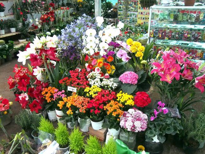 ここにある花はほとんど販売されています