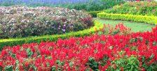 色とりどりの花が咲き乱れるダラット市フラワーガーデン