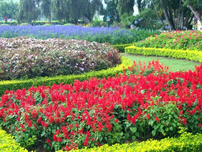 色とりどりのしっかり整備された花