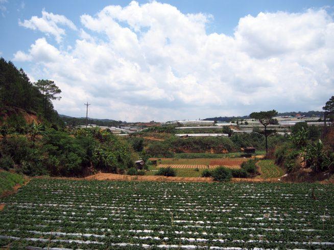 高台に広がる見晴らしの良いイチゴ農園