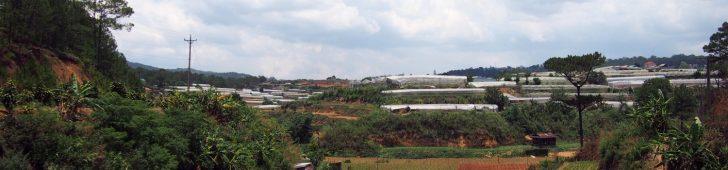 ダラットの郊外にたくさんあるイチゴ農園でイチゴ狩りを体験してみよう