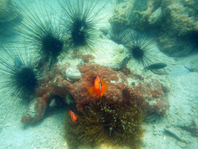 リゾート周辺では、珊瑚、熱帯の魚を見ることができます