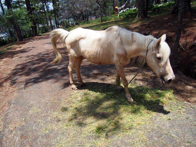 白馬もいました
