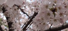ホーチミンで活動している日本人サークル・同窓会・県人会など日本人団体一覧
