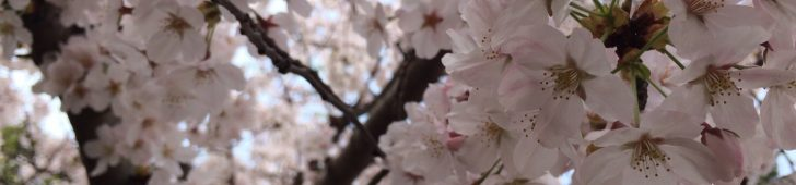 ハノイで活動している日本人サークル・同窓会・県人会など日本人団体一覧