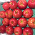 【期間限定(12月中旬~1月下旬)】AEONグループ、ベトナム国内(ホーチミン・ハノイ)で青森産りんごを販売開始