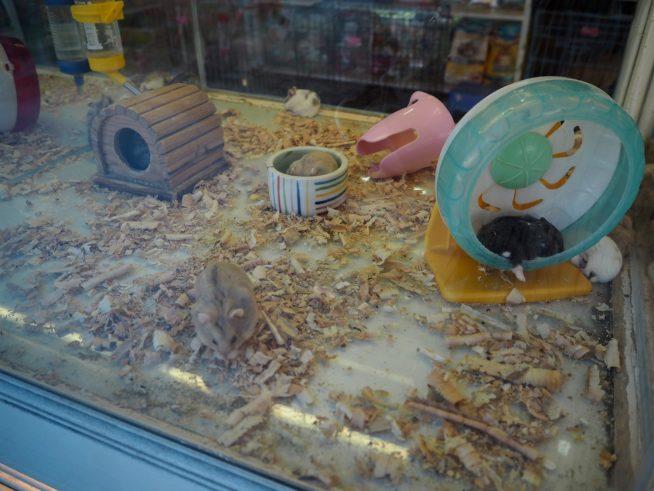 ハムスターや子犬、ペットの餌が売っているペットショップもあります。